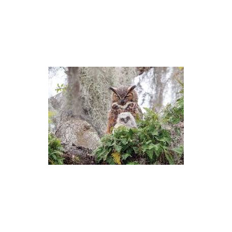 PUZZLE 1000 PZ. - GREAT HORNED OWL